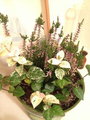 植物の先生_a0134394_81394.jpg