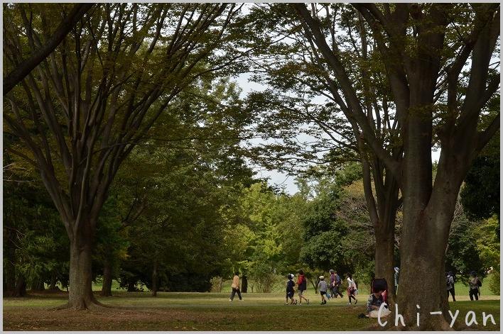 コスモスいっぱい! 「国営昭和記念公園」_e0219011_20512642.jpg