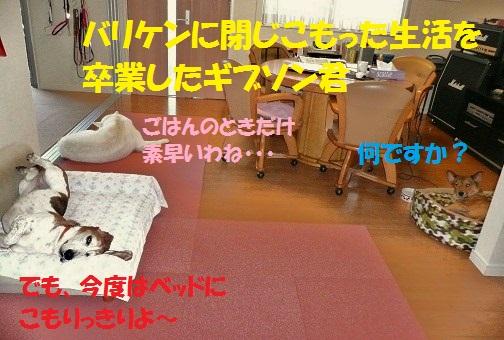 f0121712_1449167.jpg