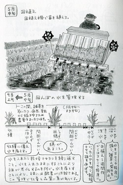 「望星」(東海大学出版会) 2012年11月号で、イラスト図解「お米ができるまで」を描きました。_f0134538_9371782.jpg