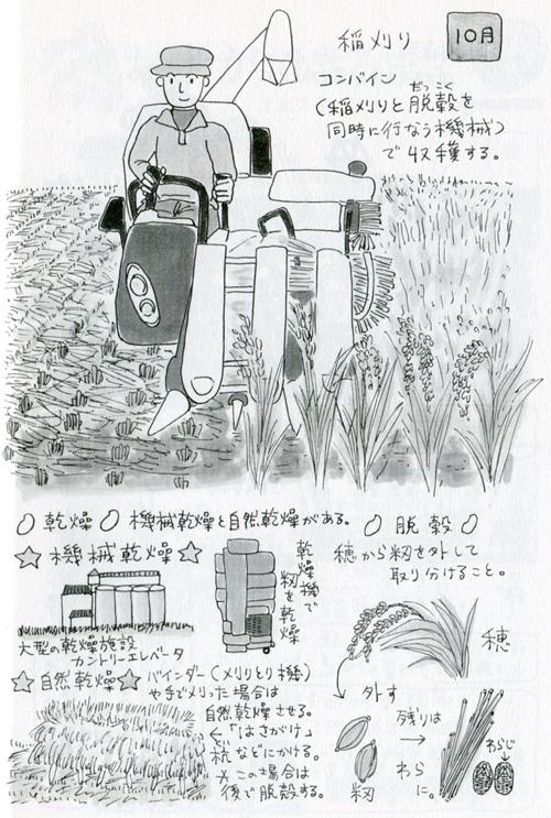 「望星」(東海大学出版会) 2012年11月号で、イラスト図解「お米ができるまで」を描きました。_f0134538_9372921.jpg