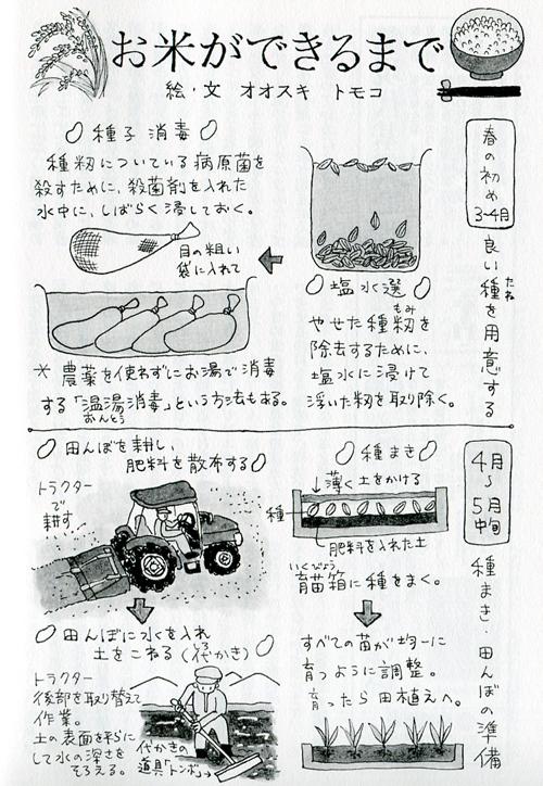 「望星」(東海大学出版会) 2012年11月号で、イラスト図解「お米ができるまで」を描きました。_f0134538_937656.jpg