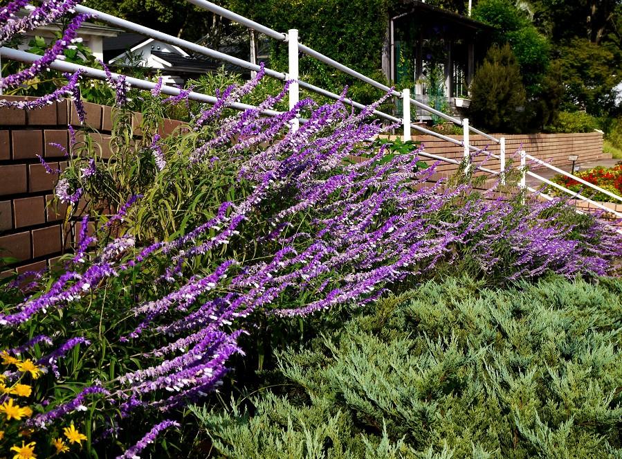 和歌山県植物公園緑花センター _b0093754_2323354.jpg