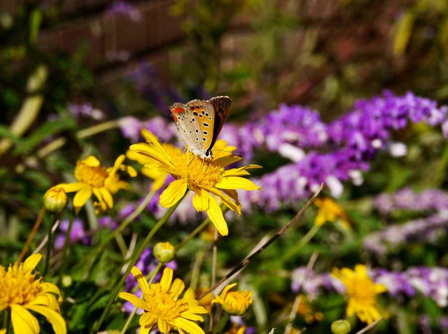和歌山県植物公園緑花センター _b0093754_2324577.jpg