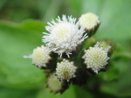 H24年10月度うみべの森を育てる会植物観察 in せんなん里海公園_c0108460_2212459.jpg