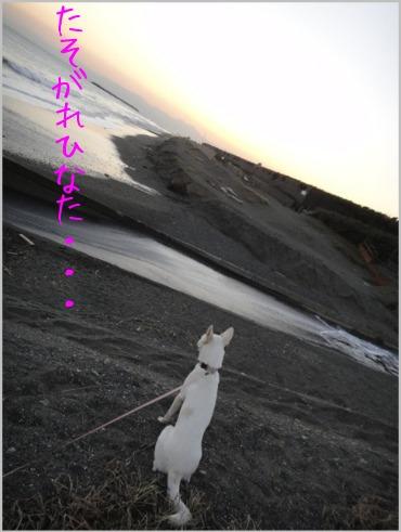 f0164479_115146.jpg