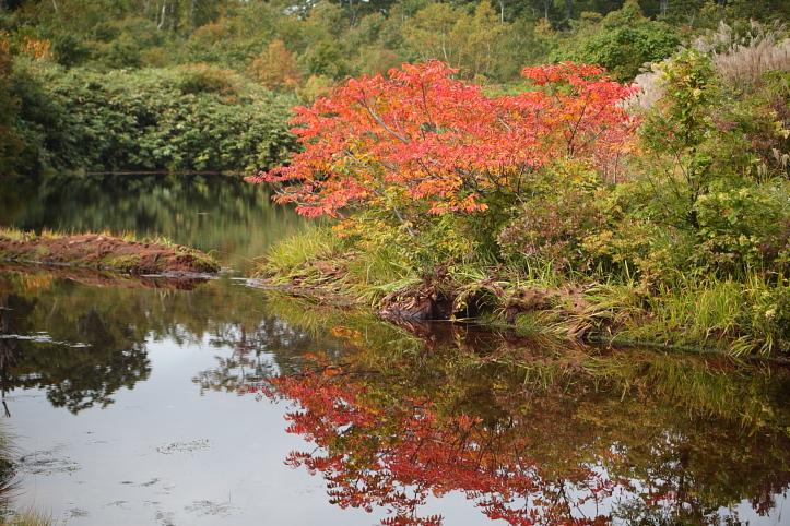 秋田 東成瀬村 シラタマノキ湿原の紅葉_e0165983_13313650.jpg