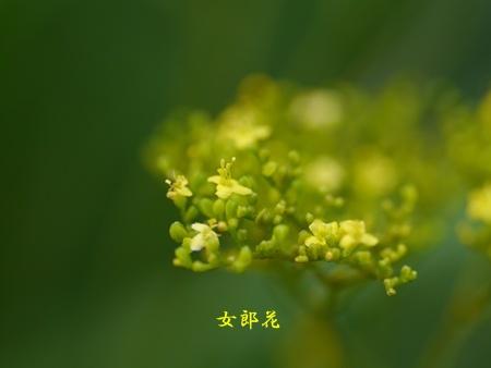 秋の向島百花園にて_b0175688_16543232.jpg