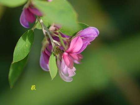 秋の向島百花園にて_b0175688_1656465.jpg