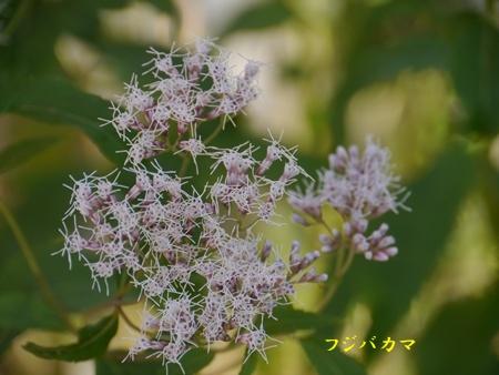 秋の向島百花園にて_b0175688_1656487.jpg