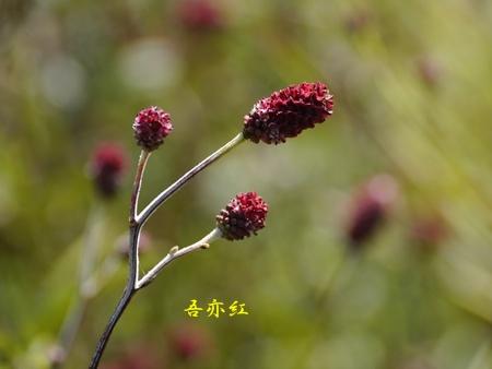 秋の向島百花園にて_b0175688_19492175.jpg