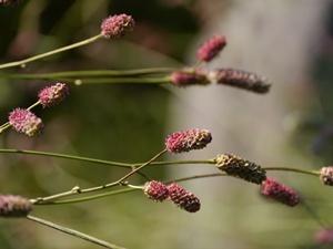 秋の向島百花園にて_b0175688_19521180.jpg