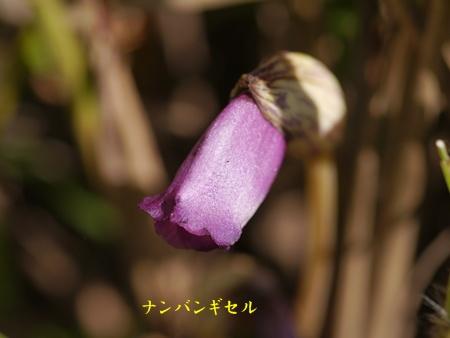 秋の向島百花園にて_b0175688_19716100.jpg