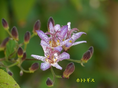 秋の向島百花園にて_b0175688_2025677.jpg
