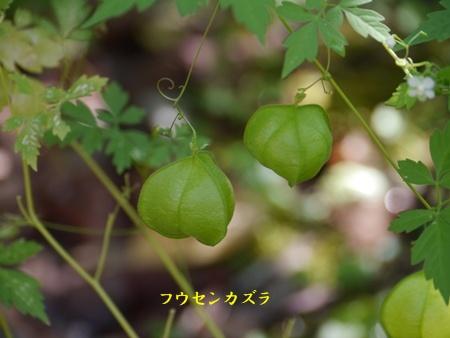 秋の向島百花園にて_b0175688_20334114.jpg