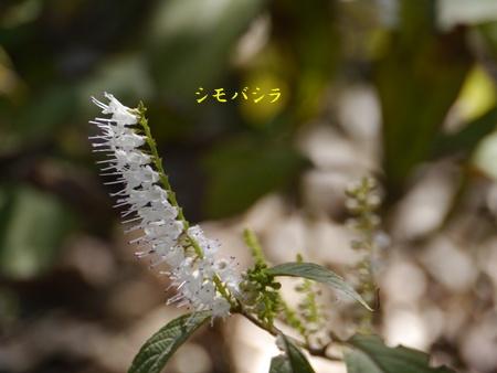 秋の向島百花園にて_b0175688_20361179.jpg