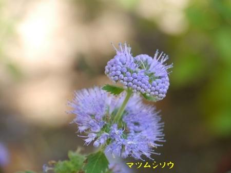 秋の向島百花園にて_b0175688_20363141.jpg