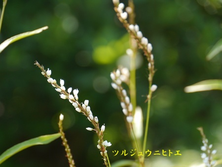 秋の向島百花園にて_b0175688_20371023.jpg