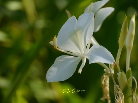 秋の向島百花園にて_b0175688_20384515.jpg