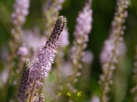 秋の向島百花園にて_b0175688_2039514.jpg