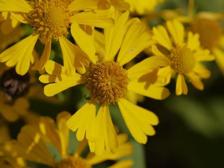 秋の向島百花園にて_b0175688_2045155.jpg