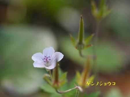 秋の向島百花園にて_b0175688_2049756.jpg