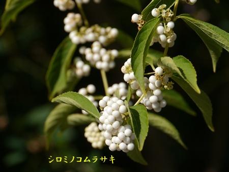 秋の向島百花園にて_b0175688_2064544.jpg