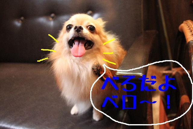 b0130018_187545.jpg