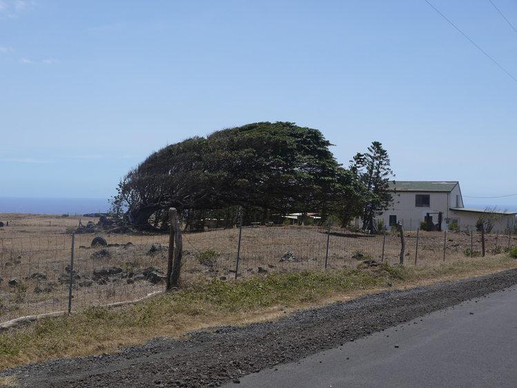 Big Island 神秘と癒しのエネルギー Vol.1_a0224731_1254533.jpg