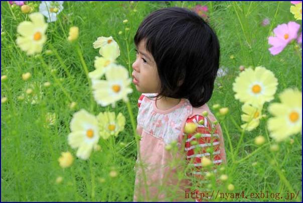 大阪万博公園(コスモス フェスタ)_f0166234_0582568.jpg