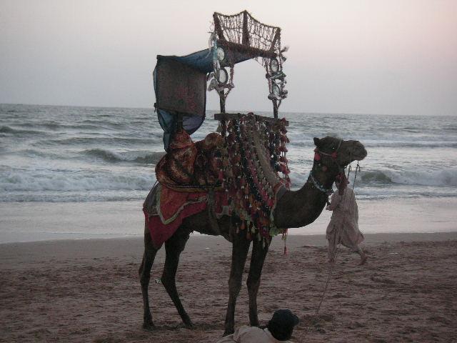 駱駝乗り_c0190938_2151017.jpg