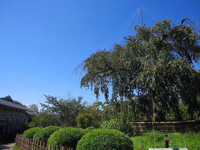 祇園・東山(花見小路・知恩院・円山公園)を散策9・27_e0237645_1711842.jpg