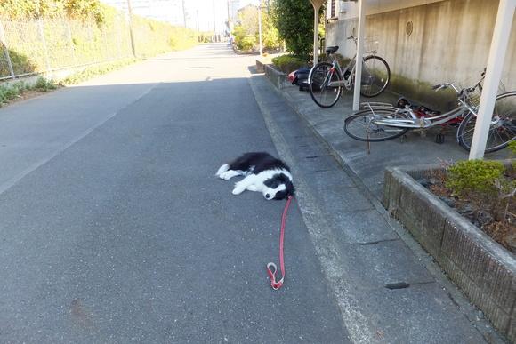 道路にボーダーが倒れてる∑(゚∇゚|||)_b0177649_2229163.jpg