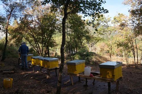 蜂の巣も冬の準備_f0106597_21543499.jpg