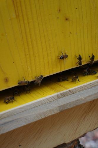 蜂の巣も冬の準備_f0106597_22104515.jpg