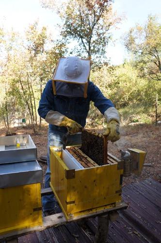 蜂の巣も冬の準備_f0106597_22111583.jpg
