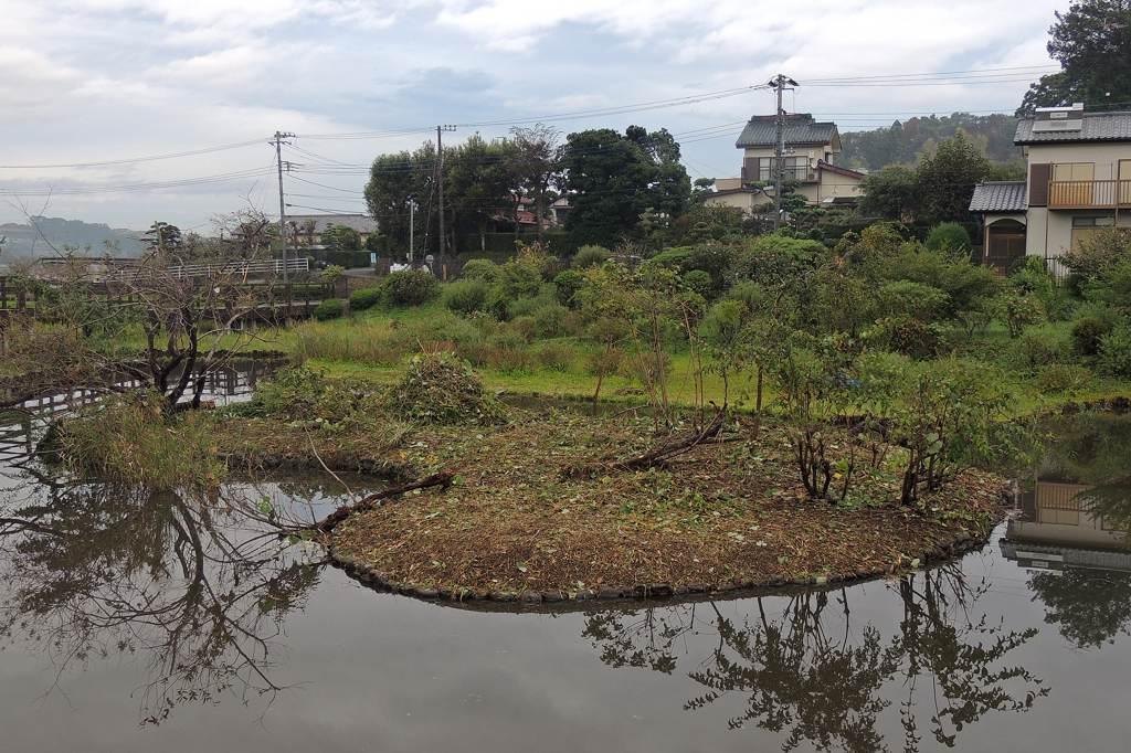 カワセミの止まり木にエゾビタキ/今朝のカワセミ/公園の池にひょうたん島_b0024798_954624.jpg