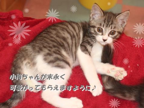 ちびニャンズ旅立ち~小梅編~_c0140599_14515237.jpg