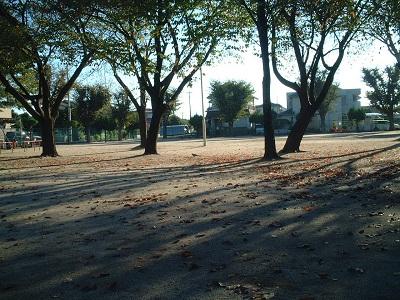 朝の散歩_b0228113_17471577.jpg