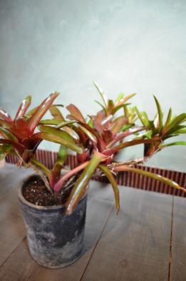 植物新入り10.19_d0263815_13562080.jpg