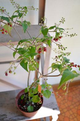植物新入り10.19_d0263815_1402187.jpg