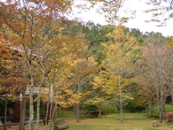 秋色ことりはうす_b0189727_14565684.jpg