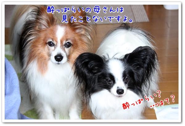 d0013149_20585137.jpg