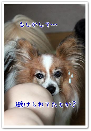d0013149_2154966.jpg