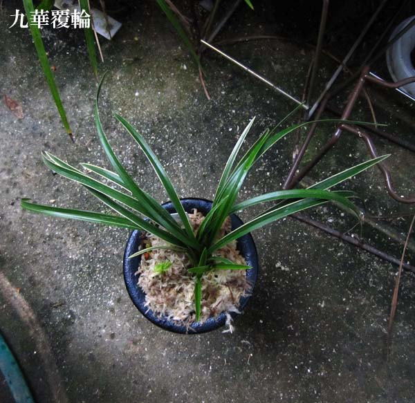 御庭焼(国焼)                     No.1210_d0103457_043688.jpg
