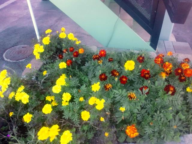 咲いてます!_b0211088_13223343.jpg