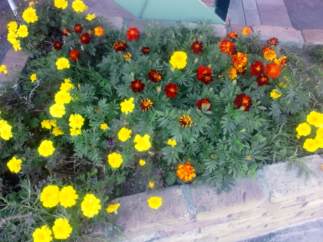 咲いてます!_b0211088_13245733.jpg