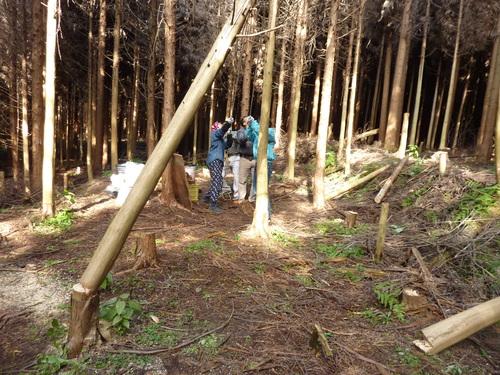 7月13日(日)「樹の伐採&森カフェ」を開催します♪_e0263590_2322567.jpg