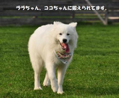 f0212597_7563035.jpg
