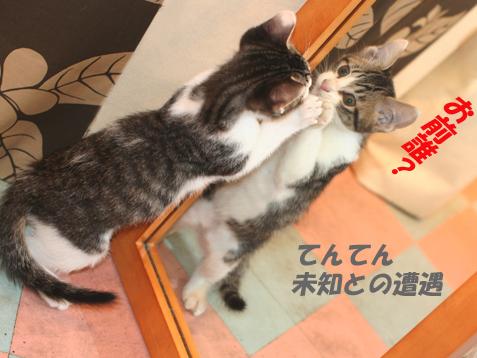 ちびニャンズ旅立ち~小梅編~_c0140599_1622418.jpg